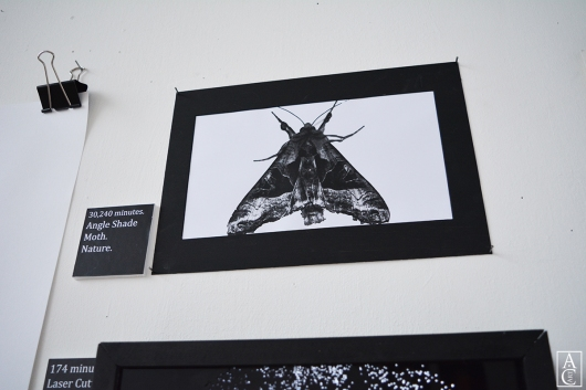 Angle shade moth