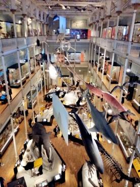 National museum of scotland speed hookup